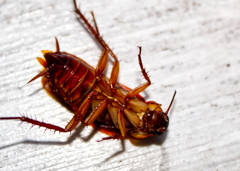 Doing Your Own Pest Control at Home